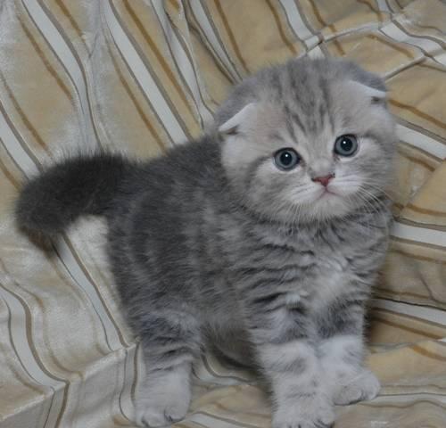 b красивое имя для /b вислоухого котенка.